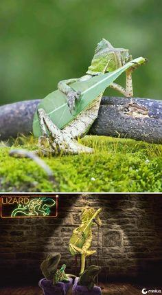 This Gecko Strumming A Leaf