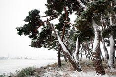 Beautiful Places To Visit, Landscape Photos, Art Pictures, Places Ive Been, Korea, Trees, Purple, Plants, Painting