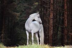 Pferdefotografie - Du möchtest ein Fotoshooting mit deinem Pferd? Alle Infos zum Pferdeshooting findest du auf meiner Homepage www.michaela-steiner.at Salzburg, Michaela, Goats, Horses, Photography, Animals, Bayern, Photoshoot, Photograph
