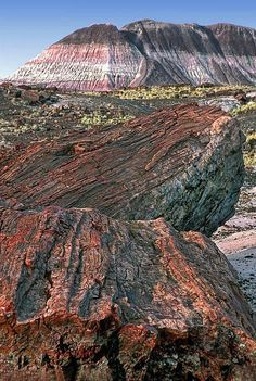 Petrified Forest National Park Photograph by Dave Mills Places Around The World, Around The Worlds, Places To Travel, Places To Visit, Petrified Forest National Park, Parque Natural, National Parks Usa, Arizona Usa, Nature Scenes