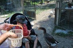 Pour faire plaisir à vos #enfants : entrez dans le petit monde du #Mas de la Gallinière l'espace de quelques heures ou d'une journée.Située au cœur de la #nature, entre #vignes et #garrigue, cette #ferme vous offrira un #voyage parmi près de 400 #animaux venus des quatre coins du monde... Plus d'infos par ici : http://www.tourismegard.com/ferme-animaliere-de-la-galliniere/roquemaure/tabid/653/offreid/69297677-b705-4445-a81e-53c81e9a808b/detail