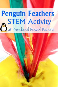 Penguin Feather Science STEM with Preschoolers! Fun for preschool, kindergarten, and elementary students!  from Preschool Powol Packets