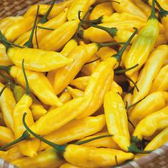 BIG List of Hot Peppers