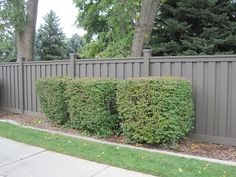 Find Your Inspiration Refined Beauty. Durability and Strength. Trex Seclusions® fencing is the best choice for privacy fencing.Unlike wood and materials made exclusively from plastic, composite fencing provides the best of both worlds — low maintenance and natural appeal. Therich tones of Trex stay vibrant throughout theirlifetime even as theyweather. Selecting Trex® for your property …