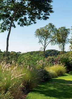 Jardim   Na outra lateral do terreno, maciços de capim-do-texas se misturam a exemplares de sibipiruna, flamboyant e pata-de-vaca (Foto: Gui Morelli/Editora Globo)