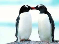 Penguin Love | Cutest Paw