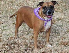 http://dogsnpawz.com/tuesdays-tails-adopt-this-boxer-mix/#.VOM5EbDF_DM
