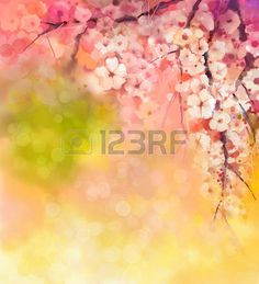 Watercolor Painting Cherry blossoms Japanese cherry Sakura floral in soft color over blurred nature  Stock Photo