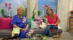 Mi casa es tu casa - María Julia y las orquídeas