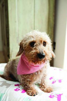 Best doggy bandanna pattern that I've seen.
