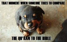 Find Out More On The Playful Rottweiler Puppies Size Cute Little Puppies, Cute Puppies, Dogs And Puppies, Rottweiler Facts, Rottweiler Puppies, Funny Puppy Memes, Hotdog Dog, Puppy Images, Easiest Dogs To Train