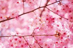 Pink Cascade by Takashi .M