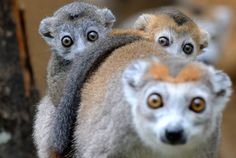50 best photos from The Natural World - Photos - The Big Picture - Boston.com