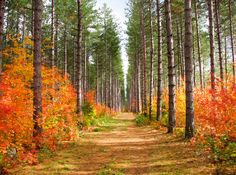 Red Pine Trail (Hiawatha Highlands, Sault Ste Marie, Ontario) by ann j p cr. Sault Ste Marie, Tree Tunnel, Take The High Road, Fall Pictures, Fall Photos, Seasons Of The Year, The Great Outdoors, Mother Nature, Places To Go