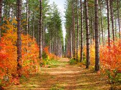 ***Red Pine Trail (Hiawatha Highlands, Sault Ste Marie, Ontario) by ann j p