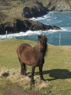 Wild Dartmoor pony on Dartmoor, Devon, England ~ almost looks like unicorn with that post in the background. Devon England, Oxford England, Cornwall England, Yorkshire England, Yorkshire Dales, London England, Beautiful Horses, Beautiful Places, Miniature Ponies