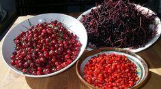 Im Herbst findet man an vielen Sträuchern und Hecken wunderschöne Beeren. Aus…
