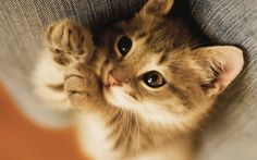20 cutest kitten pictures ever | Funny Kittens PICs
