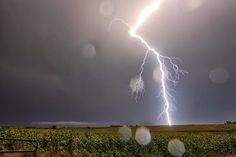 Lightning over a Kansas sunflower field late yesterday (September photo from and +Weather Lightning Photos, Lightning Storms, September 1, Sunflower Fields, Kansas, Weather, Plants, Thunderstorms, Plant