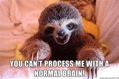 Charlie Sheen quotes by baby sloths! You need his Sun/Uranus/Pluto scrambled together!
