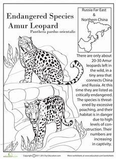 Earth Day Fourth Grade Life Science Comprehension Worksheets: Endangered Species: Amur Leopard Endangered Animals Lessons, Extinct Animals, Rare Animals, Wild Animals, Strange Animals, Jaguar, Amur Leopard, Lion, Animal Activities