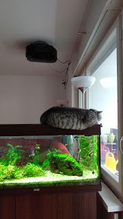 Katzentagebuch: Pause eingelegt