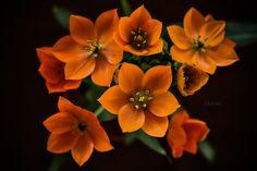 Orange bouquet - null