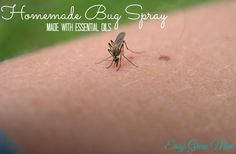 Homemade Bug Spray made with Essential Oils. Recipes and Free Printable from @easygreenmom