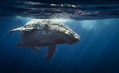 FOTOS: 6 lugares para ver ballenas en el mundo