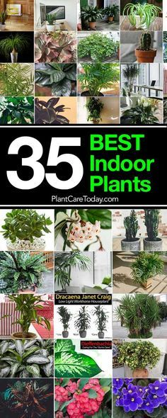 The BEST Indoor Plants list helps guide you in selecting proven houseplants for your home. Tall, floor, tabletop, high and low light plants for every home!