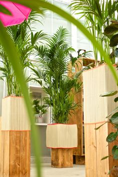 The Kentia palm trees give you the feeling that you are surrounded by nature!