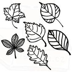 listy-listnatych-stromu.jpg (300×300)