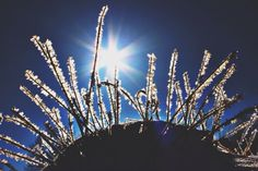 Winter. Ice. Storm. Nature. Photography. Carrie McClellan Photography. Snow. Silhouette.