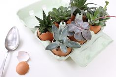 by Christelle Rousselin Deco, Terrarium, Easter Eggs, Succulents, Planters, Blog, Celebration, Etsy, Gift Guide