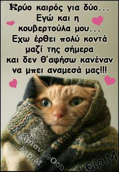 Funny Greek Quotes, Funny Cute Cats, Good Morning, Kai, Animals, Angel, Gatos, Humor, Buen Dia