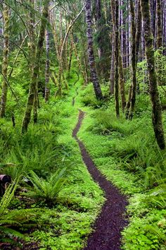 "Smithsonian Wilderness Forever Photo Contest--""Olympic peninsula, Washington"". An inviting path winds around the Aurora Ridge Trail in Sol Duc Valley, Olympic Wilderness, Wash. (Photo by Pablo McLoud/Smithsonian Wilderness Forever Photo Contest)"