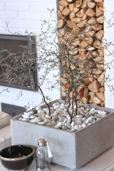 KUKKALA #kummituspuu #korokia #corokia