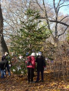 Secret Christmas Tree Dedicated to Pets, Central Park NYC