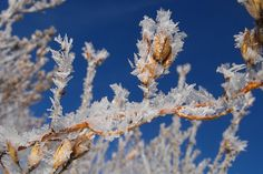 Frosty Branch by Ewunia F, via Flickr