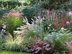 Lovely planting of grasses, Persicaria, daisies and Heuchera. Lovely planting of grasses, Persicaria, daisies and Heuchera. Landscape Design, Garden Design, Prairie Garden, Prairie Planting, Australian Garden, Heuchera, Garden Borders, Ornamental Grasses, Plantation