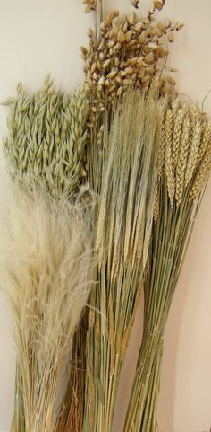 Dried grasses five pack