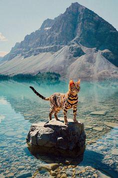 Cat on the Lake (Repost) http://ift.tt/2HRnMJS
