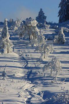 Black Forest in winter, | http://castles435.blogspot.com
