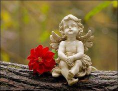 Grtnerei Thming y Blumen Julia por Carol * *