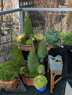 Fanciful Gardens® dwarf and miniature conifers are perfect on the urban balcony.