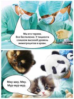 мимитроциты