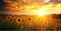 E se fosse tempo de inverter este paradigma? Aceitar aquilo que nos é dado, porque a nossa existência é fruto daquilo que fazemos e somos. E aí sim se acharmos que devemos sair desse espaço, iniciar a jornada de mudança, de uma forma descontraída e com a devida gratidão de apenas existirmos? http://oliviercorreia.com/e/blog-vida-plena