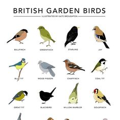 Beautifully illustrated garden bird print from Kate Broughton £35