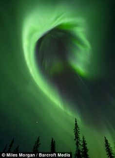 High-light: Aurora borealis pictured over a pine forest in Kiruna, Sweden. A dazzling array of lights dance across the sky in a series of stunning images captured in the Arctic borders of Europe