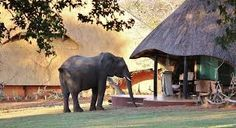 Elephant Camp and Imbabala Zambezi Safari Lodge